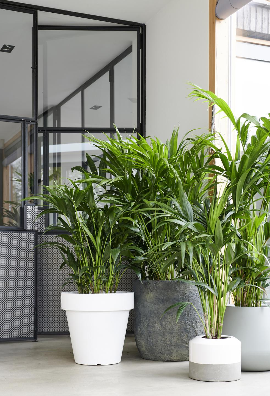 Laat planten je interieur tot leven brengen