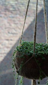 groene-styling-1